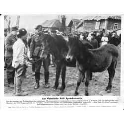 13832 WWII press photo print Ein Veterinär hält Sprechstunde Russia, 1943, Serie 1570d