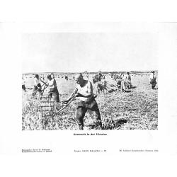 13893 WWII press photo print Erntezeit in der Ukraine Russia Photo Hoffmann